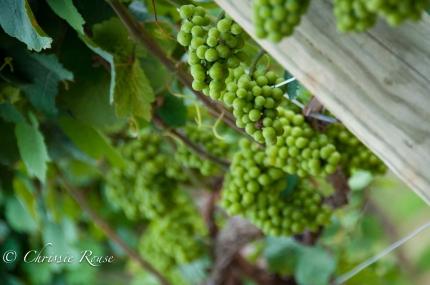 20110806_WineriesLongIsland_LoRes_013